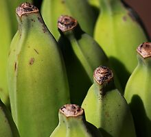 Hawaiian Bananas by Michael L. Colwell
