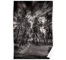 Winter Sunrise in the Forest Poster