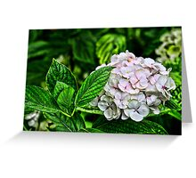 Hydrangea (HDR) Greeting Card
