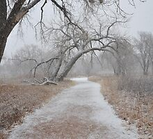 Snowy Path - Nature's Trail by TitusXavier
