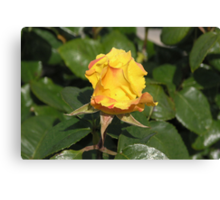 Yellow Rose Bud #2 Canvas Print