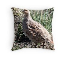 Sharp Tailed Grouse Throw Pillow