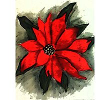 Red Poinsetta, Watercolor Photographic Print
