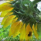 Antiqued Sunflower by Debbie Robbins
