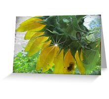 Antiqued Sunflower Greeting Card