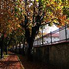 Autumn Colors by gernerttl