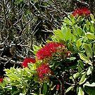 Flowering Pohutukawa.......! by Roy  Massicks