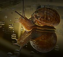 Snail by Josie Jackson