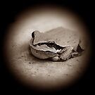 Tree Frog In Sepia by Jonice