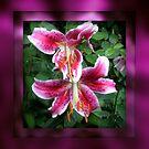 Star Gazer Lillies by Mechelep