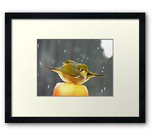 I Have A Sinking Feeling Hun!!! - Silvereyes - NZ ** Framed Print