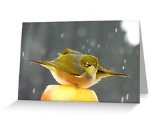 I Have A Sinking Feeling Hun!!! - Silvereyes - NZ ** Greeting Card