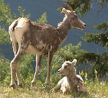 Motherhood by Sean Jansen