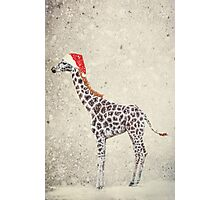 Christmas Giraffe Photographic Print