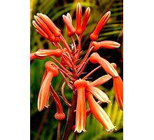 Aloe Vera Flower Photographic Print