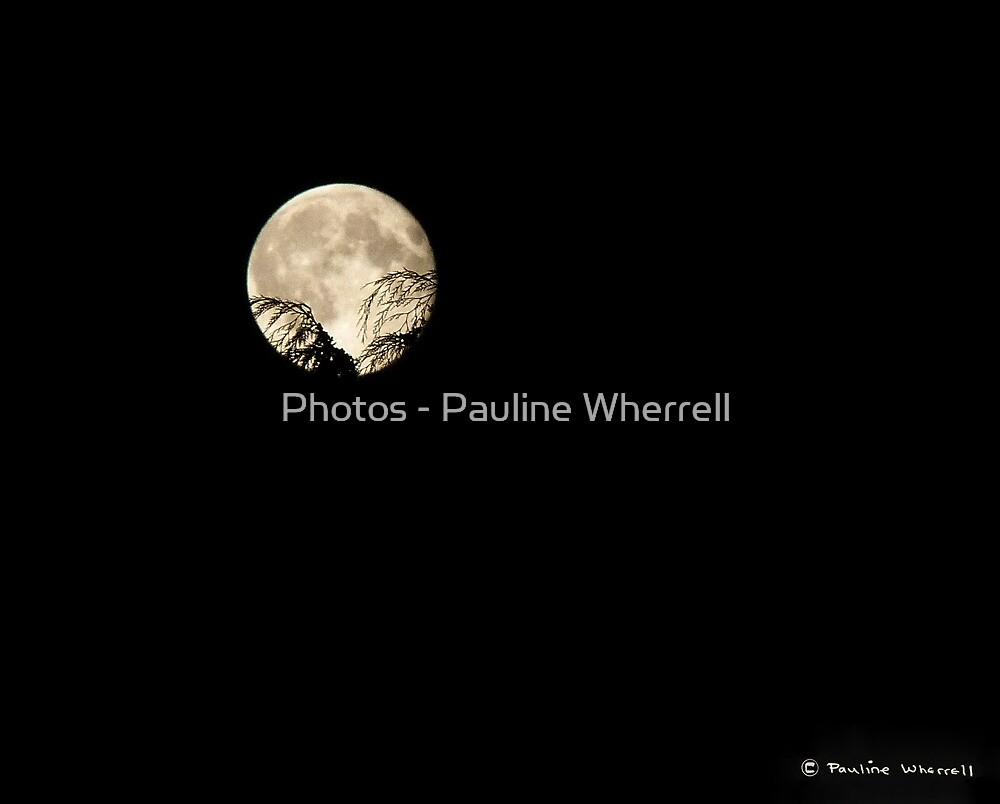 Full moon 12/9/11 harvest moon by Photos - Pauline Wherrell