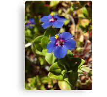 Wildflowers, Fitzgerald Bay, Lowly Peninsula, South Australia Canvas Print