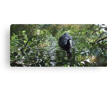 Duck In Green Soup Canvas Print