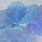 Blue Hortensia Memories by IngeHG