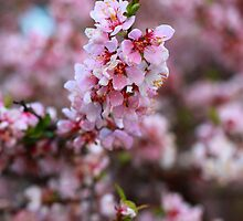 Spring Has Arrived by Cameron B