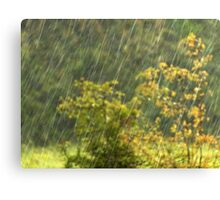 Irish Rain Canvas Print
