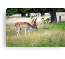 Foraging for food Canvas Print