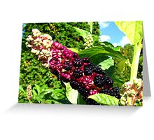 Phytolacca acinosa Greeting Card