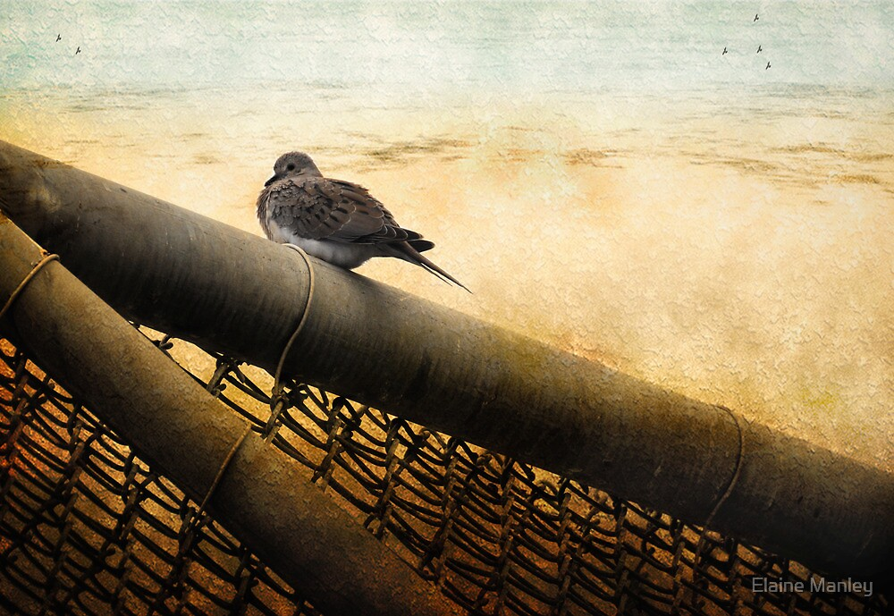 Mourning Dove by Elaine  Manley