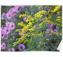 Fab Fall Flowers Poster