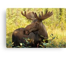 Mornin Y'All Canvas Print