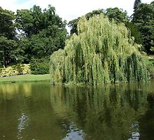 Willow Pond by horacecornflake