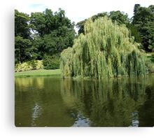 Willow Pond Canvas Print