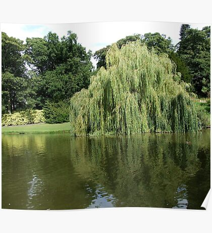 Willow Pond Poster