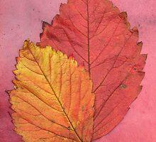 autumn leaves  by kittenmomo