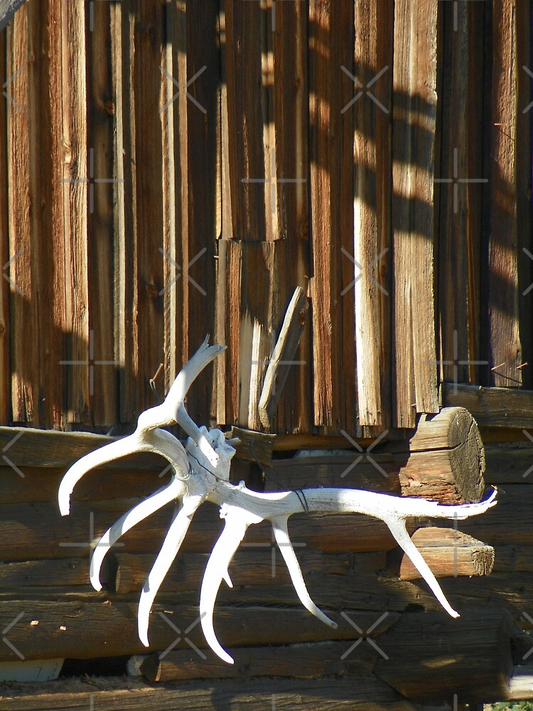 Old Elk Antlers by Betty  Town Duncan