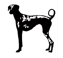 Dog Graphic by Edward Fielding