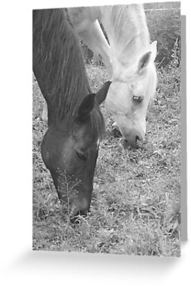 The Favorite Horse Position by Karen K Smith