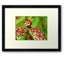 Do I Clash With These Spots? Framed Print