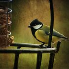 Great Tit by Rachelo