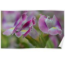 (Wishbone) Magenta Torenia Blossoms Poster