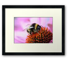 Bumblebee on a flower Framed Print