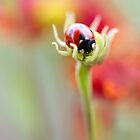 Natures hold by Mandy Disher