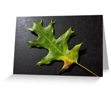Fallen green leaf Greeting Card