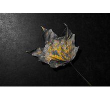 Color splash fallen leaf Photographic Print
