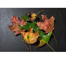 Leaf lineup Photographic Print