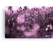 Through Rose Coloured Glasses Canvas Print