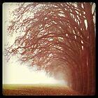 Walk in the park by Anitajuli