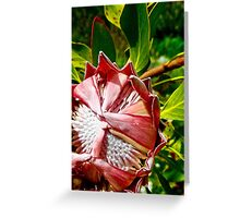Flowers can be Shy Too Greeting Card