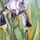 Blue Iris in Full bloom by Marsha Woods