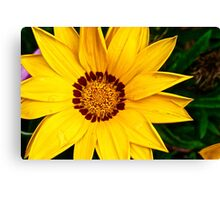 Yellowing is Saying Hello Canvas Print